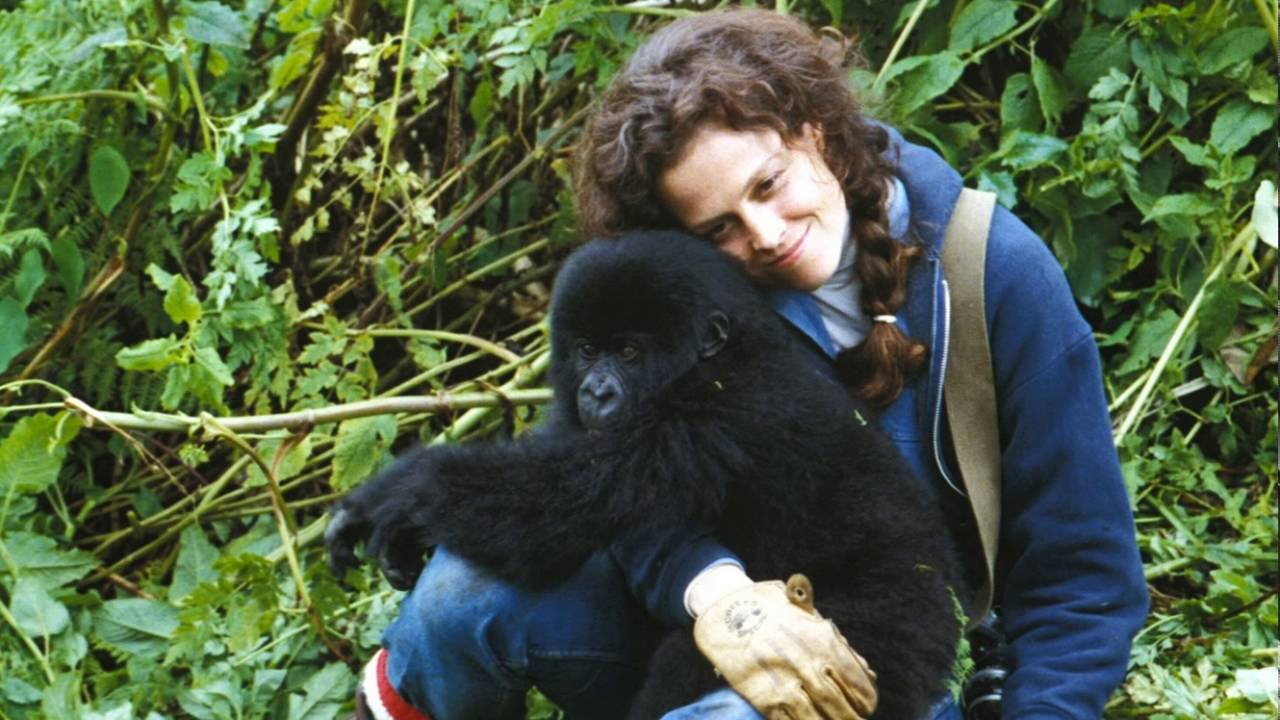 Sigourney Weaver in GORILLAS IN THE MIST (1988). Copyright Warner Bros.